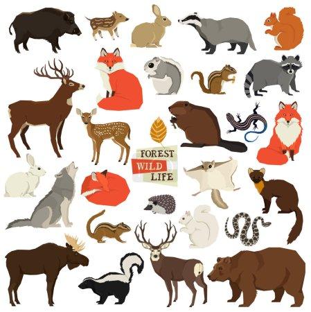 Photo pour Illustrations vectorielles des animaux sauvages Faune forestière Objets isolés Ensemble de style géométrique - image libre de droit