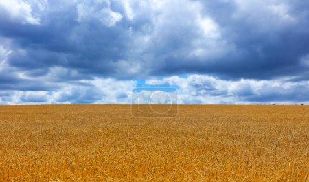 Photo pour Champ de blé et ciel nuageux - image libre de droit