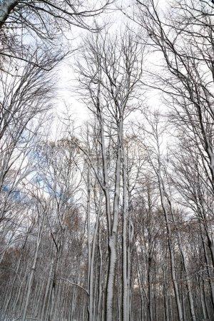Photo pour Vue panoramique de nature magnifique paysage enneigé - image libre de droit