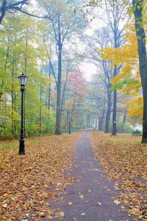 Photo pour Diverses forêts caduques colorées d'automne - image libre de droit