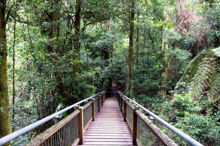 Photo pour Sky Walk Dorrigo Rainforest, Nouvelle-Galles du Sud, Australie - image libre de droit