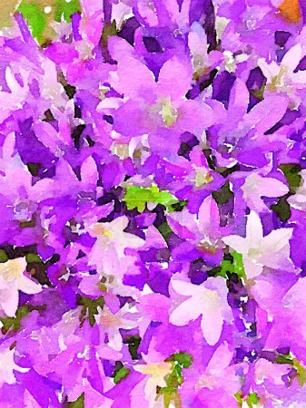 Photo for A beautiful original Watercolor of a bouquet of Campanula - Royalty Free Image