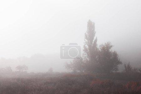 Photo pour Paysage d'automne avec brouillard dans la forêt - image libre de droit