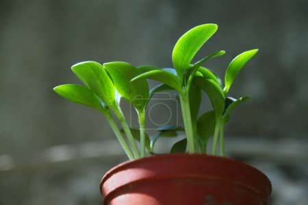 Photo for Close up of Plant growth-New life - Royalty Free Image
