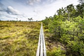 Trail of wooden planks on a swamp area in Scandinavia
