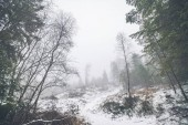 Winter landscape in a misty forest with snow on the ground and a hill with tree silhouettes
