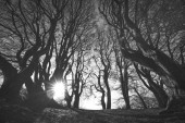 Spooky forest in black and white