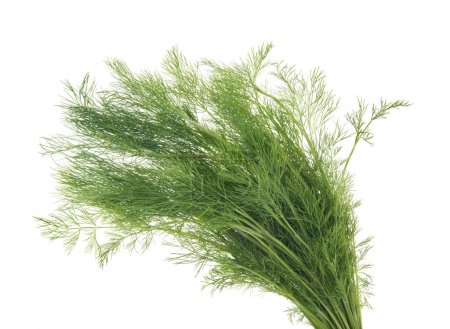 Photo for Dill,  isolated on white - Royalty Free Image