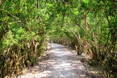 Photo pour Sentier ombragé panoramique à travers la forêt de mangrove. Incroyable de bois verts. Paysage d'été merveilleux. - image libre de droit