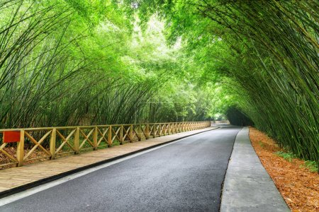 Photo pour Étonnante route sinueuse entre forêts de bambou vert. Route panoramique à travers forêt. Arbres du bambou belle. - image libre de droit