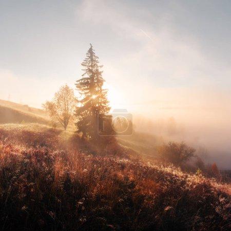 Amazing scene on autumn mountains