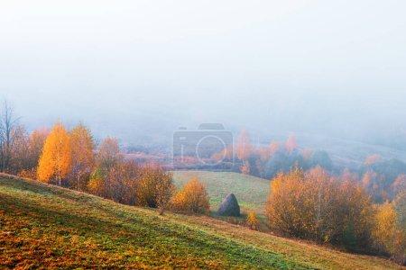 Photo pour Scène incroyable sur les montagnes de l'automne. Arbres jaunes et oranges dans le soleil du matin fantastique. Carpates, Europe. Photographie de paysage - image libre de droit