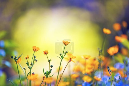 Photo for Early spring wildflowers on the background of bokeh green grass. Majestic nature wallpaper with garden. Floral springtime. Copy space for text. Sunny day. - Royalty Free Image