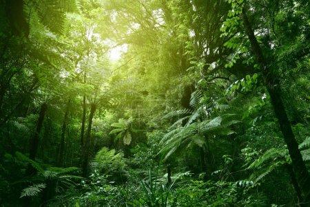 Photo pour Canopée ensoleillé dans une jungle tropicale - image libre de droit