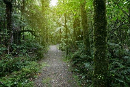 Photo pour Sentier pédestre dans la forêt tropicale - image libre de droit
