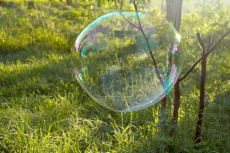Big soap bubble flying in the air at park