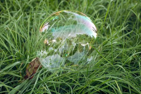 Big soap bubble lying in green grass at the park