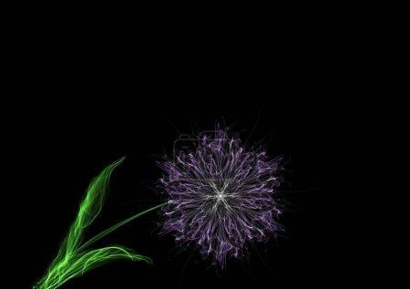 Foto de Flor madura de trébol de cristal en hoja de tallo, dibujo gráfico luminoso de neón de seda aislado en negro, arte generador interactivo - Imagen libre de derechos