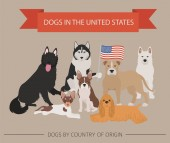 Dogs in the United States American dog breeds Infographic template Vector illustration