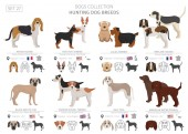 Hunting dogs collection isolated on white Flat style Different color and country of origin Vector illustration