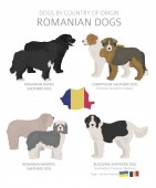 Dogs by country of origin Romanian dog breeds Shepherds hunti