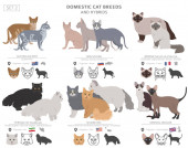 Domestic cat breeds and hybrids collection isolated on white Fl