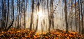 Forest enchanted by rays of sunlight in winter or autumn