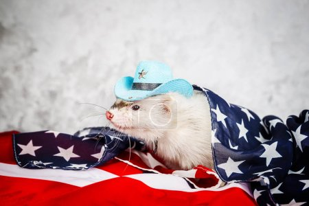Little cute ferret on the USA flag