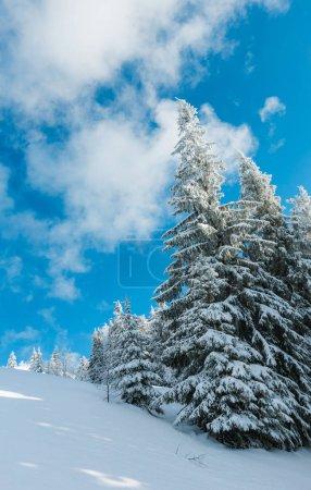 Photo pour Paysage de montagne calme d'hiver avec de beaux arbres givrants et des dérives de neige sur la pente (Carpates, Ukraine ) - image libre de droit