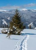 """Постер, картина, фотообои """"Горы утром живописный зимний вид из альпийских пути с след. Скуповая горный склон, Украина, вид черногорский хребет топы, Карпаты."""""""