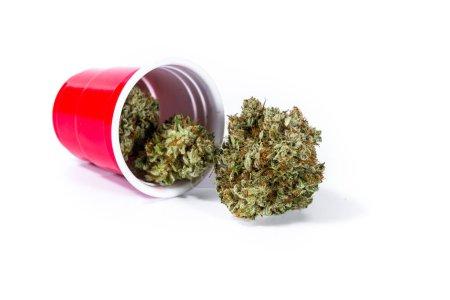 Photo pour Cp en plastique rouge renversé avec des bourgeons de cannabis débordant isolés sur un fond blanc - image libre de droit