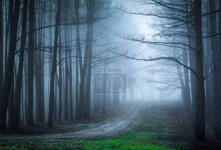 Moody forest with heavy fog