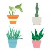 House plants vector cartoon botanical  botany flat illustration isolated on white background