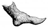 Half boot attila vintage engraved illustration Industrial encyclopedia E-O Lami - 1875