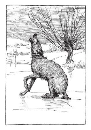 Illustration pour Queue du loup gèle dans le lac gelé et hurle, dessin à la ligne vintage ou illustration de gravure - image libre de droit