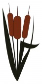 Clipart of a cattail plant/Typha vector or color illustration