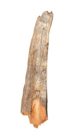 Tree stick isolated on white background