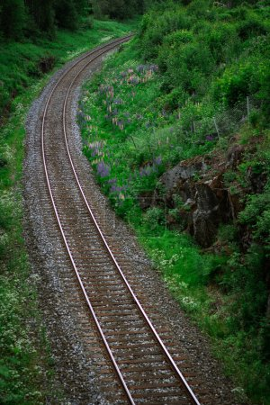 Photo for Picturesque view of railroad rails through forest at sunny day - Royalty Free Image