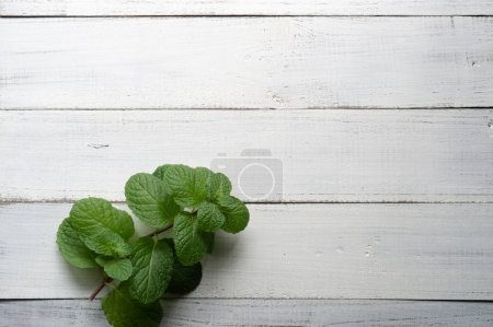 Photo for Bundle of freshly harvested wild Mentha aquatica or Water mint on wooden surface of old oak table with copy space - Royalty Free Image