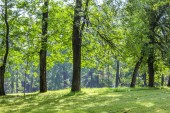 Summer Park. Background summer park. Bright nature, trees with green leaves. Walk in the fresh air