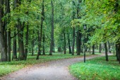 Beautiful autumn park. Nature, travel