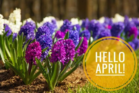 Banner hello april. Hi spring. Hello April. Welcom...