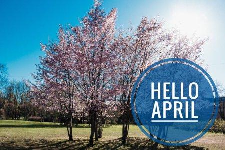 Foto de Hola bandera abril. Hola primavera. Hola abril. Tarjeta de bienvenida estamos a la espera para el mes de la nueva primavera. Mes de la primavera. El segundo mes de la primavera - Imagen libre de derechos