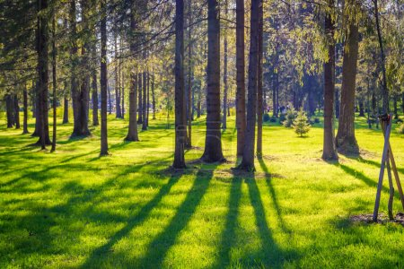 Photo for Beautiful landscape of spring park with green trees on sunny day - Royalty Free Image