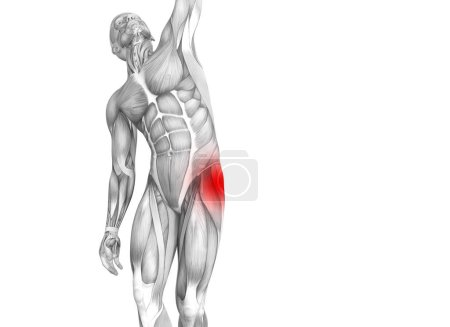 Photo for Conceptual hip human anatomy with red hot spot inflammation articular joint pain for leg health care therapy or sport muscle concepts. 3D illustration man arthritis or bone sore osteoporosis disease - Royalty Free Image