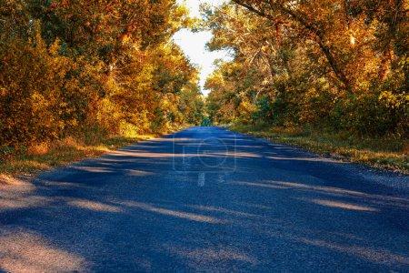 Photo pour La cime des arbres en automne dans la forêt - image libre de droit