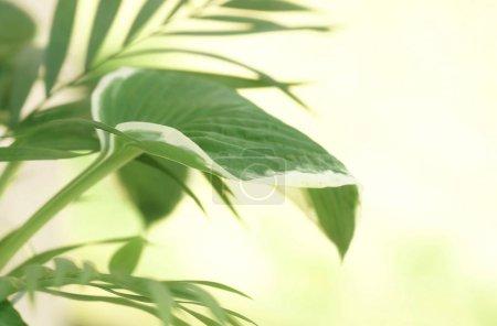 Foto de Ramas de las palmeras tropicales sobre fondo blanco. Concepto floral mínimo. Copia espacio - Imagen libre de derechos