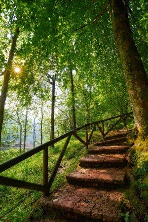 Escaliers de forêt de Covadonga dans les montagnes des Asturies Picos de Europa Espagne