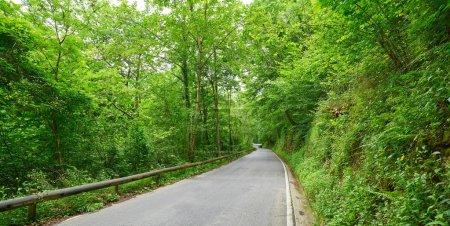 Forêt de route de Covadonga dans les montagnes des Asturies Picos de Europa Espagne