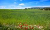 Spring meadows at Camino de Santiago Levante Saint James Way